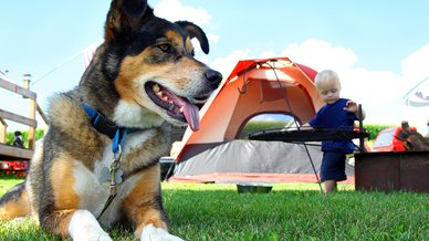 dog camping.jpg