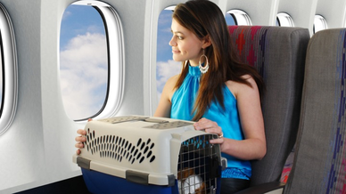 traveling-with-a-pet-picture-id157424508.png