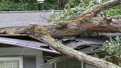 tree crashed through roof.jpg